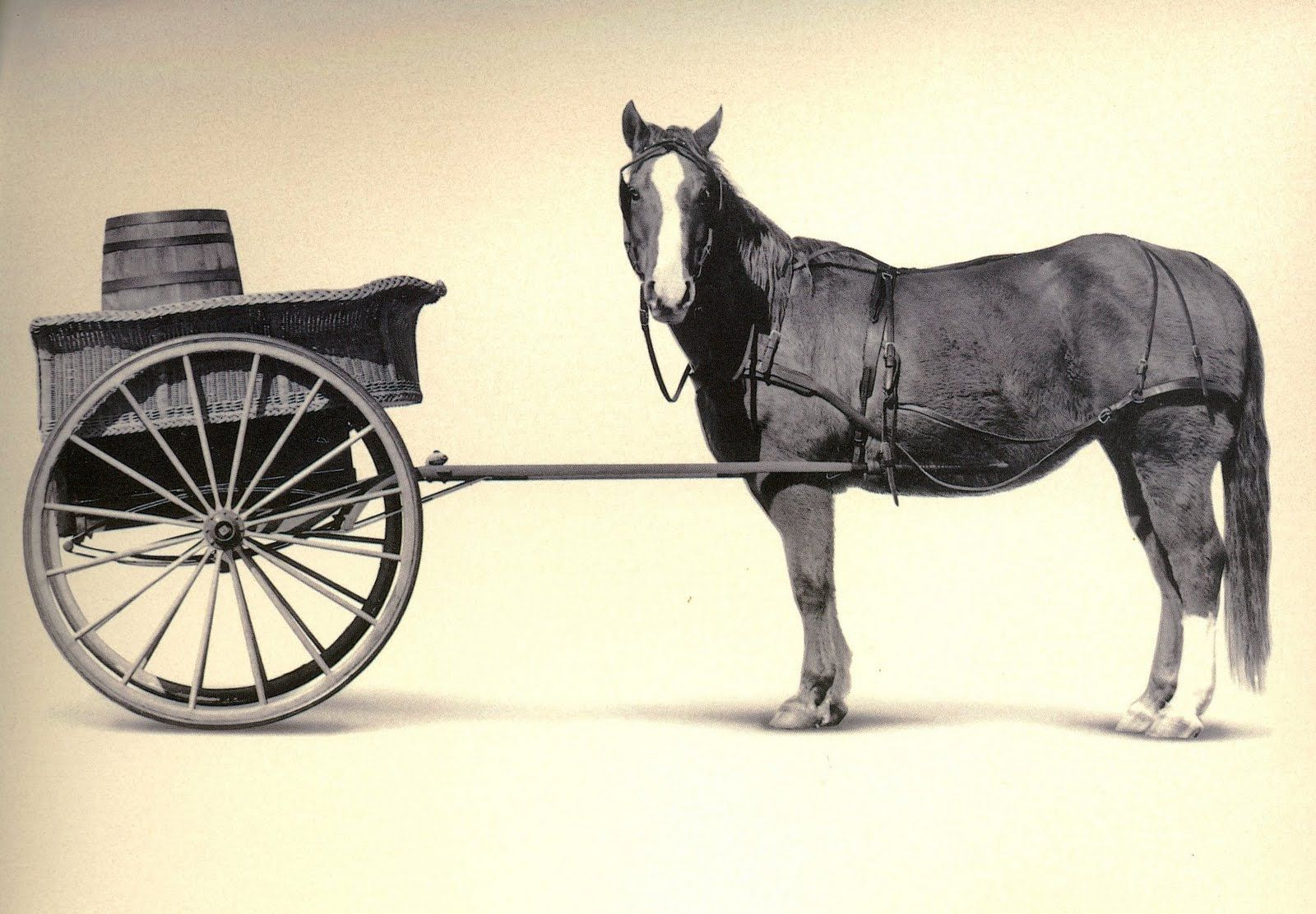 The Horse and the Cart
